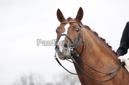 horse with headstalls