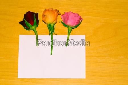 rose in an envelope