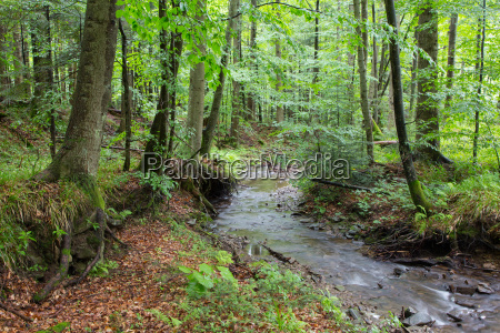 peaceful forest stream flow down among