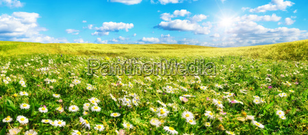 sun warms wide meadow full of