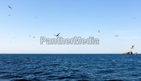 birds near isla grosa spanish