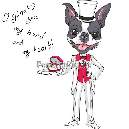 vector fashion elegant groom dog boston