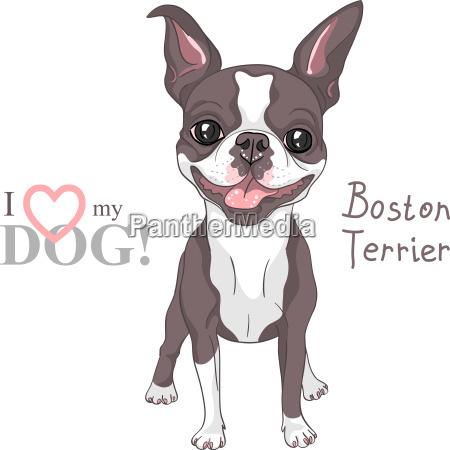 vector sketch dog boston terrier breed