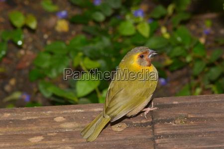 little birdie flits up