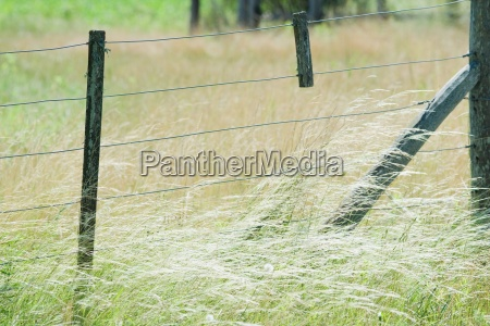 rural fence in field of tall