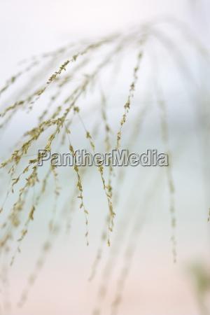 wispy plant cropped view