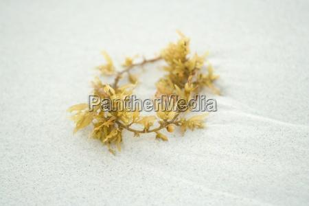piece of seaweed on sand close