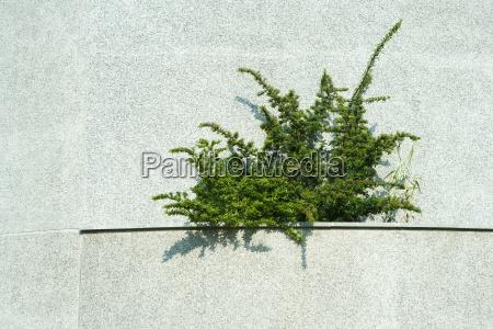 plant growing in concrete ledge