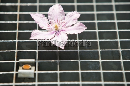 flower on metal grate