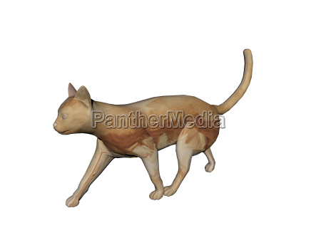 exempted brown cat