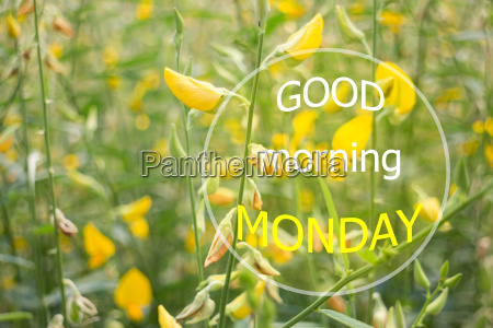 good morning monday quote design poster