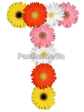 letter t alphabet of flowers cut