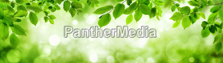 green leaves and luminous panorama background
