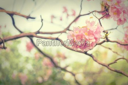 pink trumpet flower vintage effect