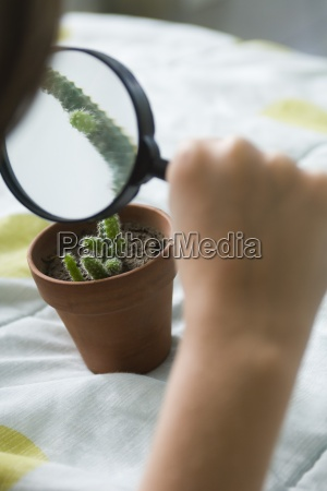 examining cactus through magnifying glass