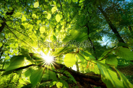 sunbeams shine effectively through leaves