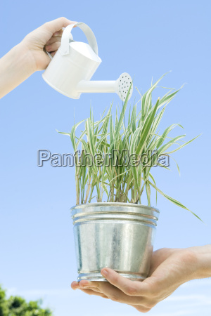 potted plant being watered