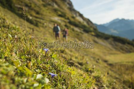 austria tyrol tannheimer tal flowers growing