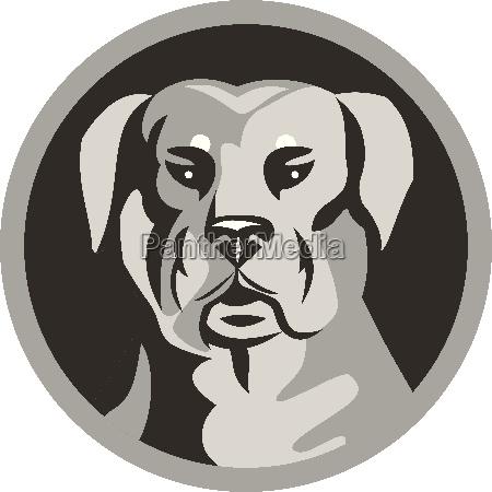 rottweiler guard dog head circle black
