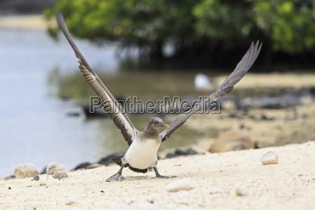 ecuador galapagos islands genovesa darwin bay