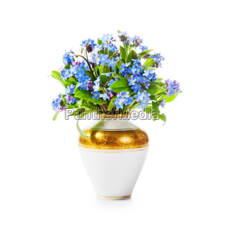 forget me not flowers in vase