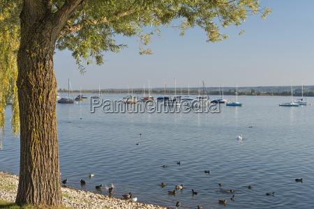 germany baden wuerttemberg lake constance sailboats