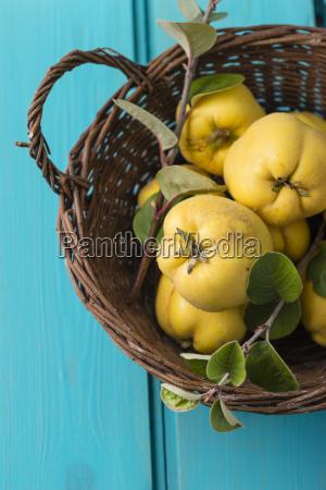wickerbasket of quinces