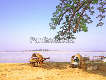 ox cart beside irrawaddy river in