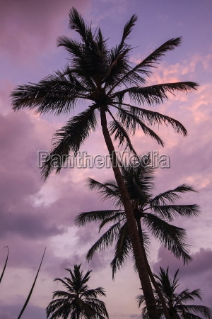 palm trees sky holiday travel purple