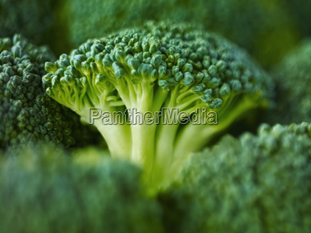 extreme close up of raw broccoli