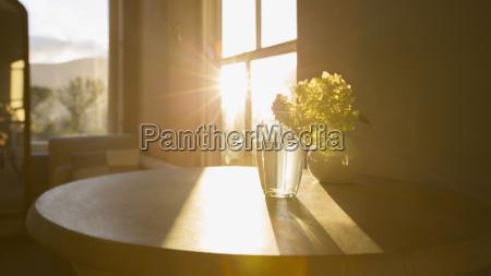 sun shining in window behind flower