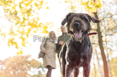 portrait of couple walking dog in