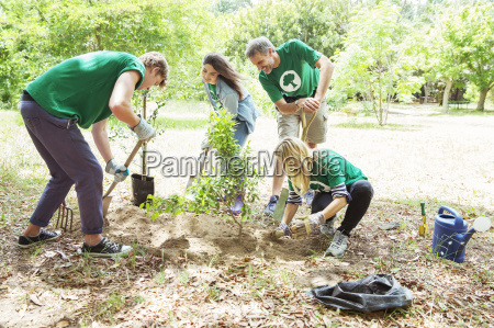 environmentalist volunteers planting new tree