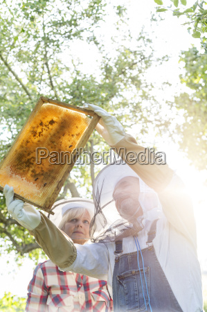beekeepers in protective clothing examining bees