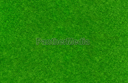 well maintained lawn
