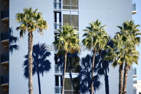 palm trees at the residential building