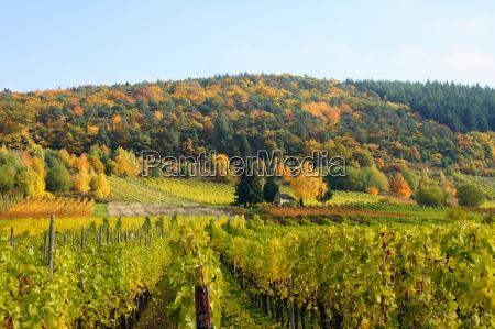 wine landscape near burg an der
