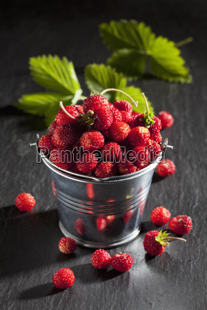 zinc bucket of wild strawberries and