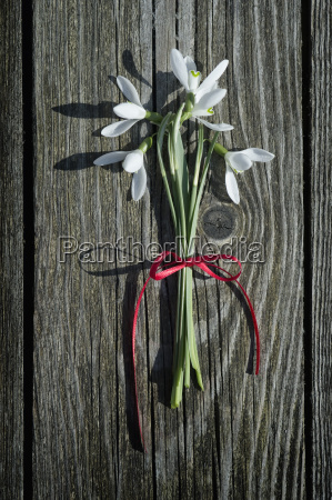 bunch of snowdrops on wood
