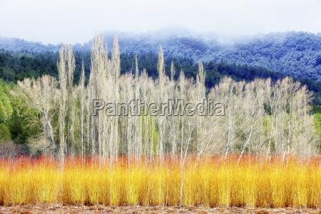 spain cuenca wicker cultivation in canamares