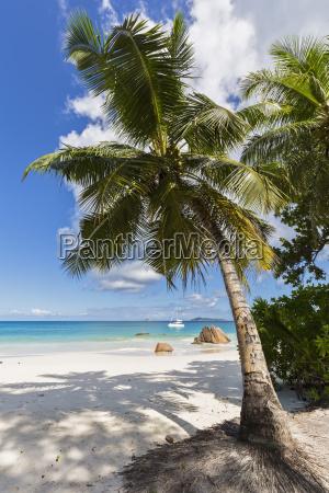 seychelles praslin anse lazio catamaran palm