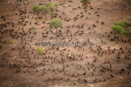 chad zakouma national park aerial view