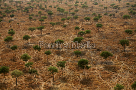 chad zakouma national park aerial view