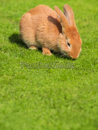 rabbit on a meadow