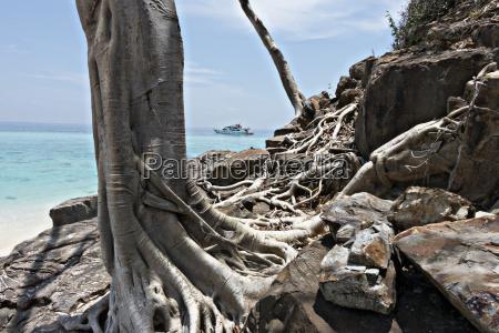 thailand bamboo island bizarre tree roots