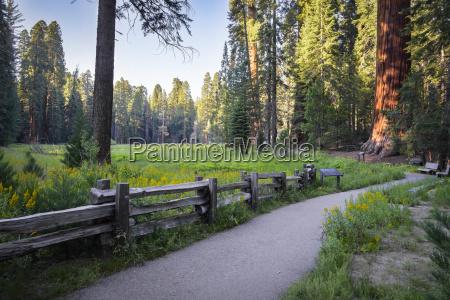 usa california sequoia national park big