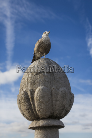 seagull perching on ornament