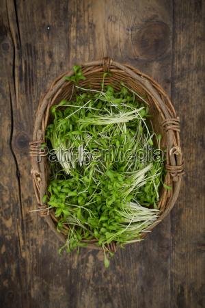 garden cress in basket