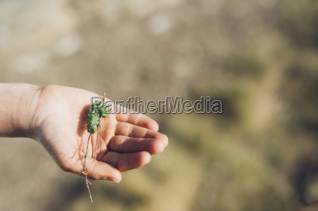 boys hand holding caterpillar