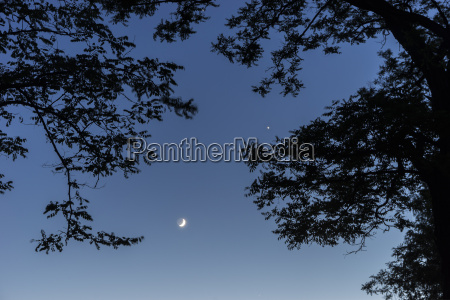 silhouette of trees moon and venus